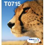 Epson C13T07154511 (T0715) Ink cartridge multi pack, 7,4ml+3x5,5ml, Pack qty 4