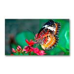 "NEC MultiSync UN462A signage display 46"" Plasma Full HD Video wall Black"