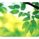 Fellowes Earth Series Mouse Pad Leaves