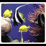 Fellowes Under The Sea Multicolour
