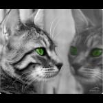 SPEEDLINK Silk Mousepad, Cat