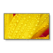 "NEC MultiSync ME431 Pantalla plana para señalización digital 109,2 cm (43"") IPS 4K Ultra HD Negro"