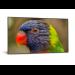 """DynaScan DS752LR4 pantalla de señalización 190,5 cm (75"""") LCD 4K Ultra HD Negro Android 7.1"""