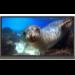 "Benq RP860K 2.18 m (86"") LED 4K Ultra HD Interactive flat panel Black"