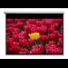 """Optoma Pantalla 16:9 2656 x 1494mm projection screen 3.05 m (120"""")"""