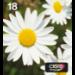 Epson C13T18064511 (18) Ink cartridge multi pack, 175pg + 3x180pg, 1x 5ml + 3x 3ml, Pack qty 4
