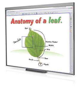 SMART Technologies SB480 interactive whiteboard 195.6 cm (77